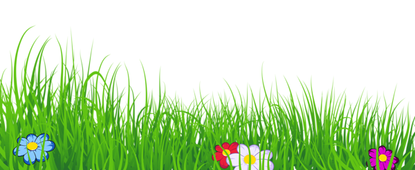 Grass Transparent Clipart