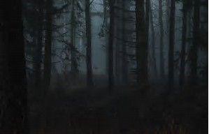 Dark Jungle Dark Forest Night Forest Night Aesthetic