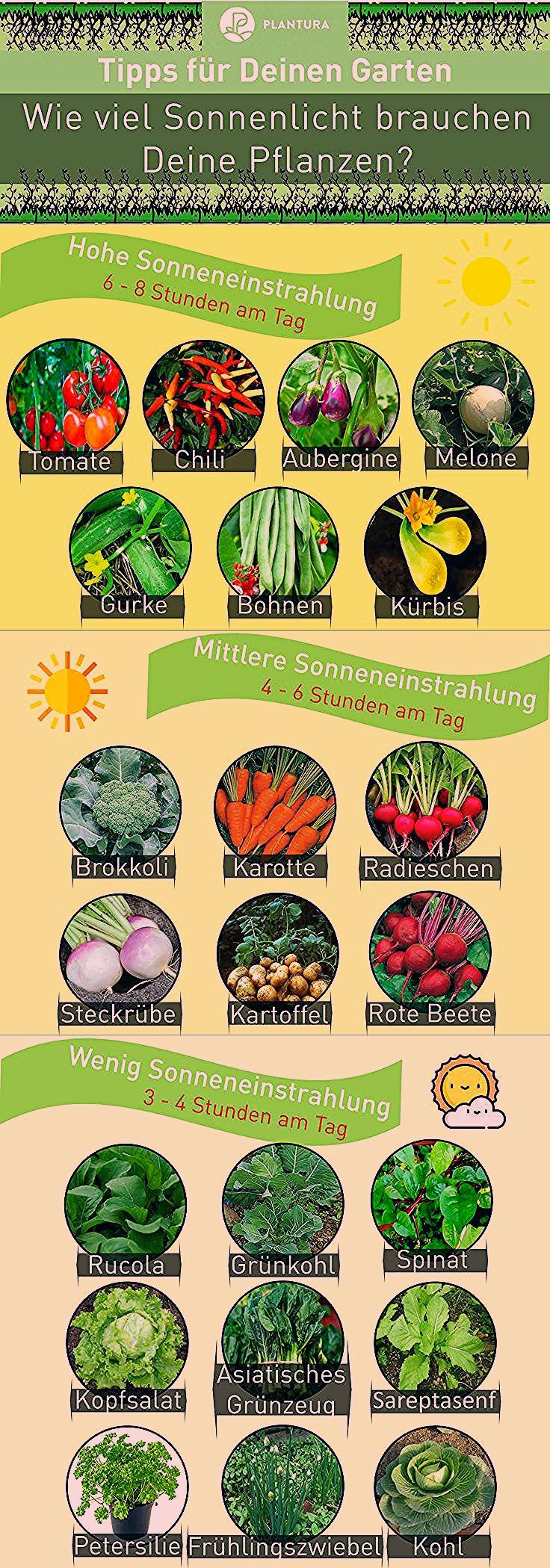 Photo of Schattenpflanzen: 16 Pflanzen für den Schatten in Ihrem Garten – Plantura