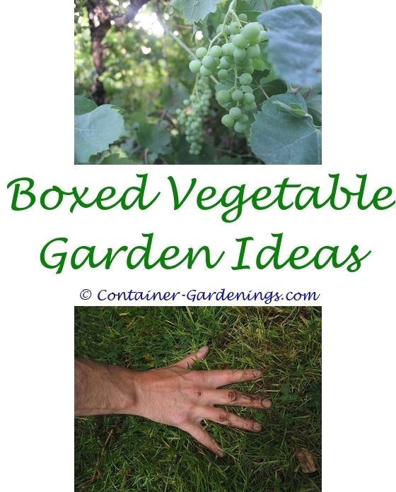 organic gardening tips - small terraced front garden ideas.build ...