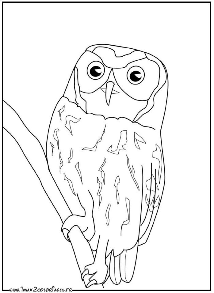 coloriage Hibou | coloring 5 | Pinterest