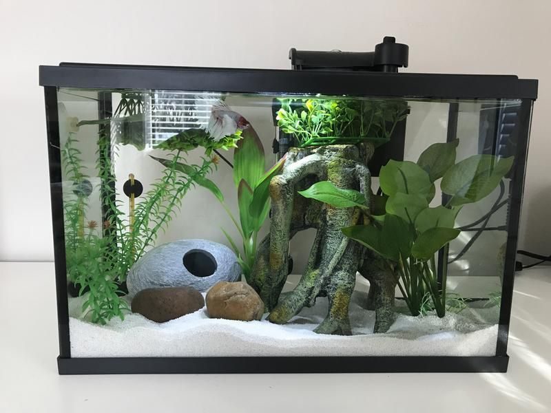 Front View Betta Fish All Fish Indoor Plants