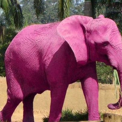 Baby Pink Elephants Real | Whoa! Pink Elephant! Fake or Real ...