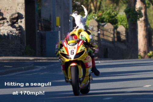 Trouble, hitting a seagull at 170mph