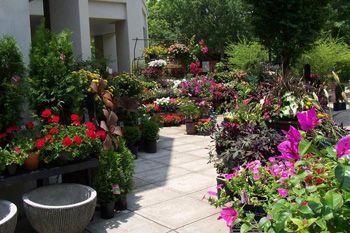 Leaf N Petal Garden Shop Indoor Outdoor Plants Birmingham Botanical Gardens