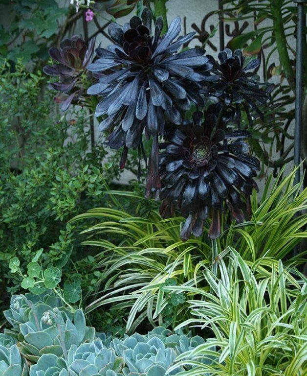 Succulent Plants: March 2011