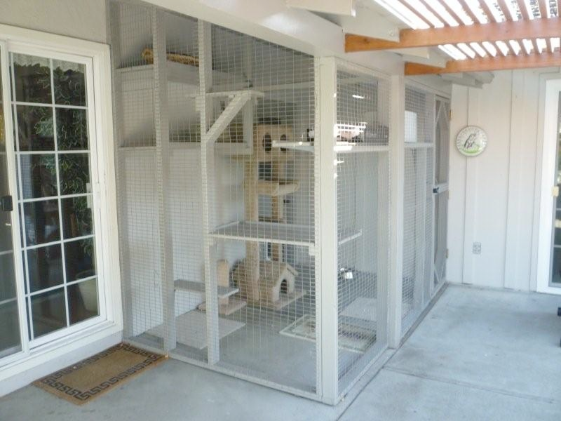 Enclosures For Cats Outdoor Cat Enclosure Cat Enclosure Cat Cages