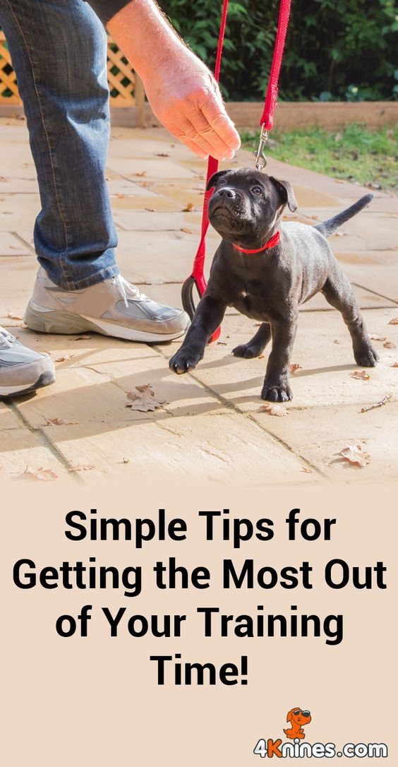 Dog Training, Barking Does Not Have To Be Tolerated