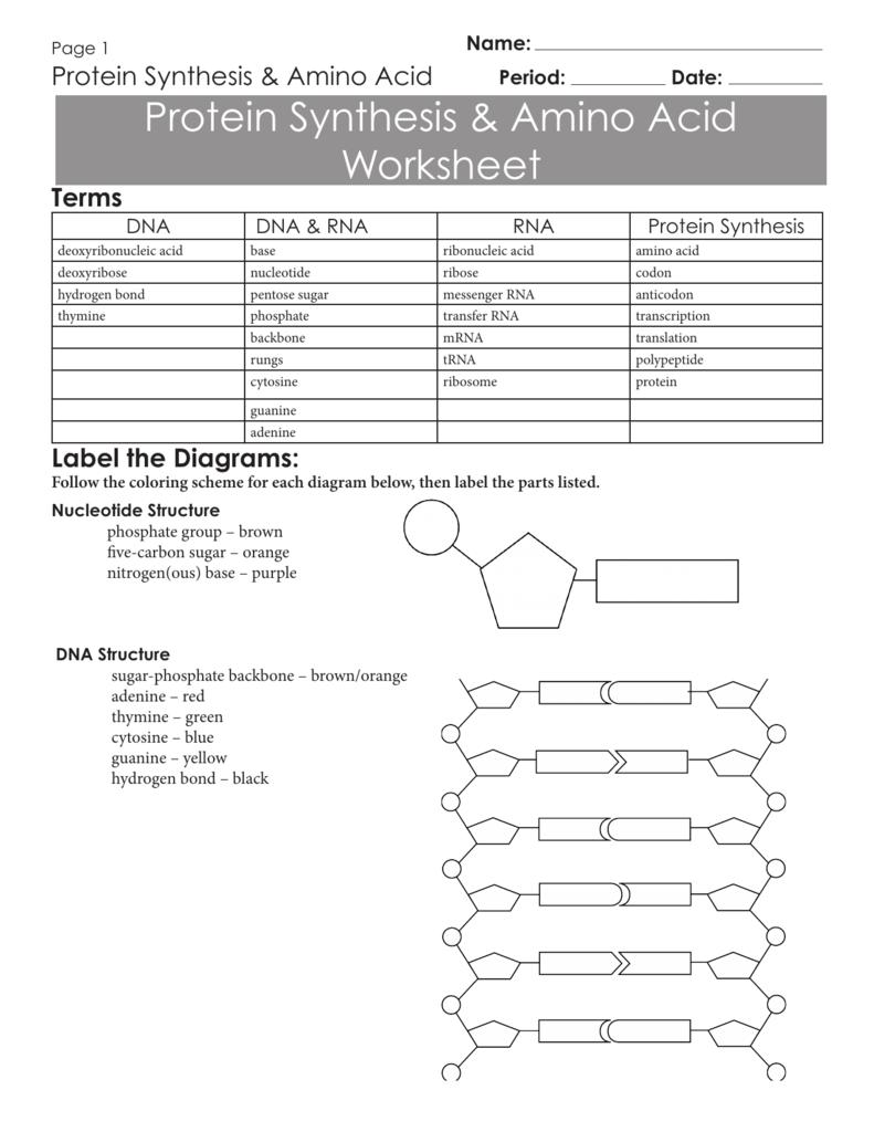 """Résultat de recherche d'images pour """"dna worksheet"""" Dna"""