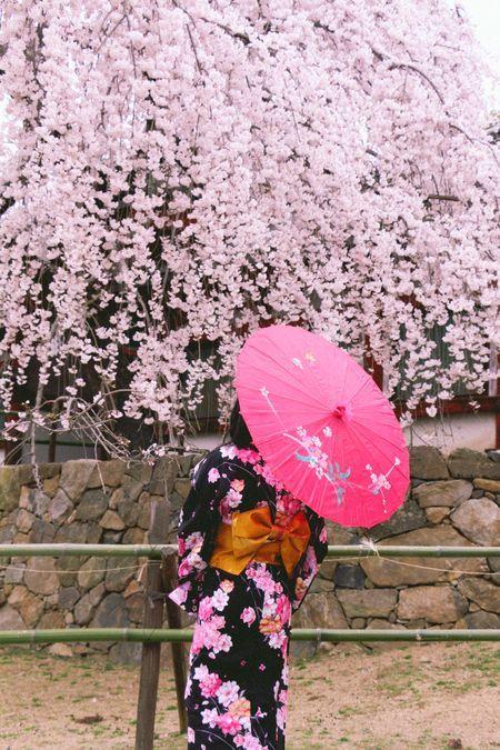 Japan Girl Watch Sakura Photo By Kim Keong Lim National Geographic Your Shot Japan Sakura Japan Photography Blossoms Art