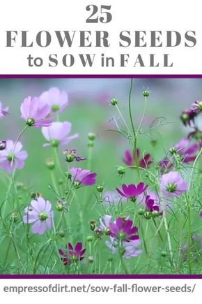 Give these flower seeds a head start in fall for beautiful flowers in spring and summer. Get the free printable list and add some blooming beauty to your garden.#seedsowing #fallsowing #fallgarden #empressofdirt