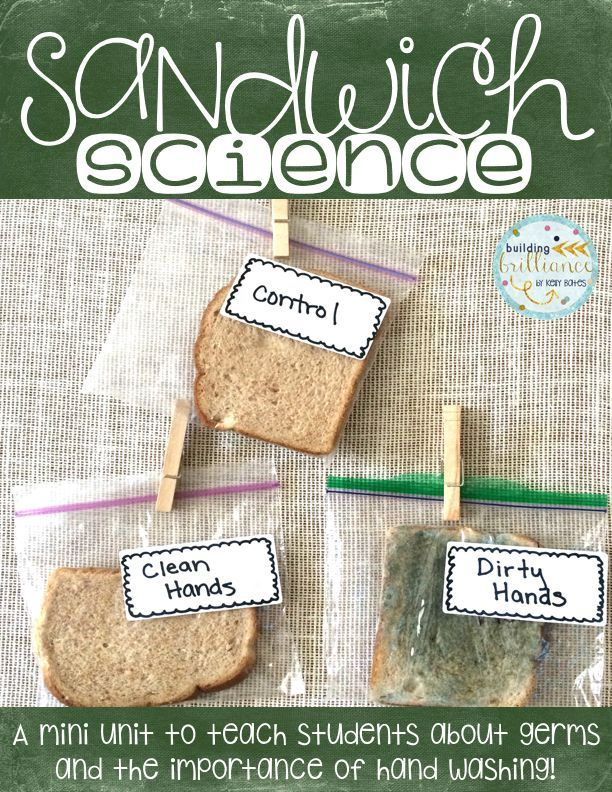 Sandwich Science A Mini Unit About Germs And The Importance Of