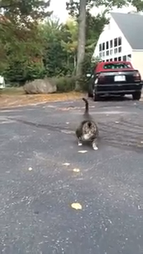 Funny Cat Viral Video