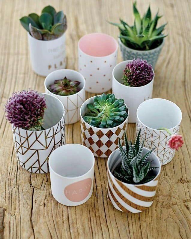 ???? . . ???? let's green it ???? . . ???? ???? ???? Merry Christmas ???????? ???? _________________________________ ???? Please FOLLOW @sherifgarden ⬅ . . . #plants #decor #gardendesign #gardening #gardens #plants #flower #flowers #gardenlove #gardenlife #gardeninglife #soil #plantsmakepeoplehappy #gardendesigns #gardeningtips #garden #gardener #love #photography #photoshoot #instaplants #letsgreenit #indoorplants #outdoorplants #plantsarrangment #plantsdecoration #outdoordecoration #photogra