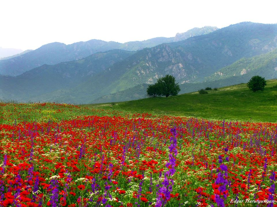 List of Armenian Americans - Wikipedia