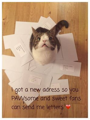 We just got a new mail adress for Monty, so you pawsome and sweet fans can send Monty letters if you want to. We will of course make a video each month when he opens his letters. Here it is: Kattens Vaern. att. Monty. Sandager 11. 2605 Brondby. Denmark.