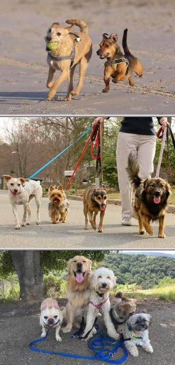 Are You Looking For Reliable Dog Walkers In Your Location Try