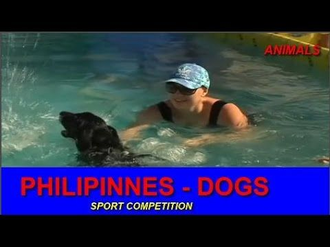 Most endangered animals on the planet 2017 | Philippinnes - Dogs