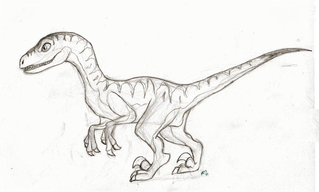 image result for drawings of raptors  drawings art