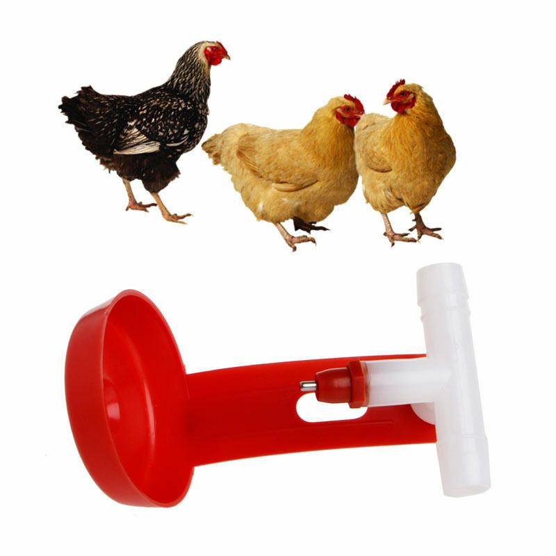 Chicken Automatic Drinker Farm Animals Bird Coop Poultry Fowl Drinking Fountain Chickenhouse Chickencoopp Chickens Backyard Backyard Poultry Poultry Supplies