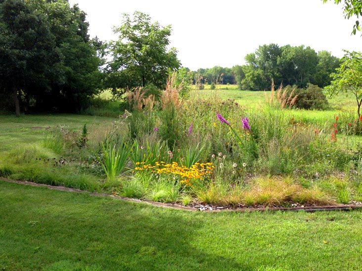 A 700 Sq Ft Native Plant Demonstration Garden Showcasing High Value Wild  Flowers And Grasses In An Innovative Meadow Design.