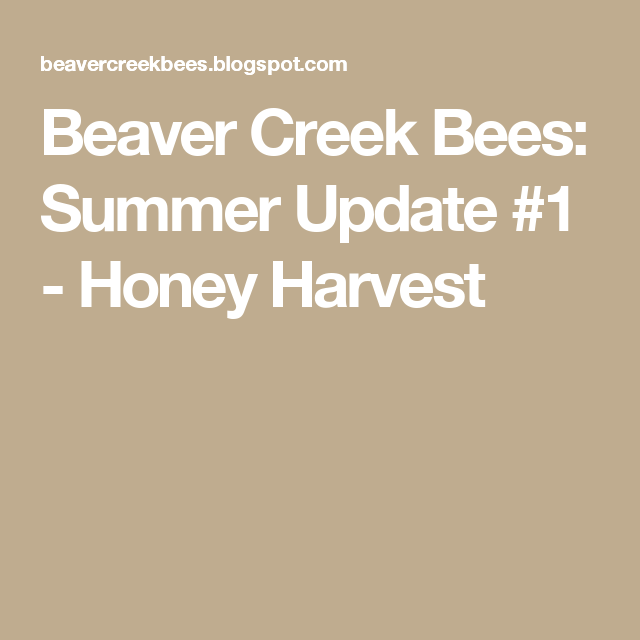Beaver Creek Bees: Summer Update #1 - Honey Harvest
