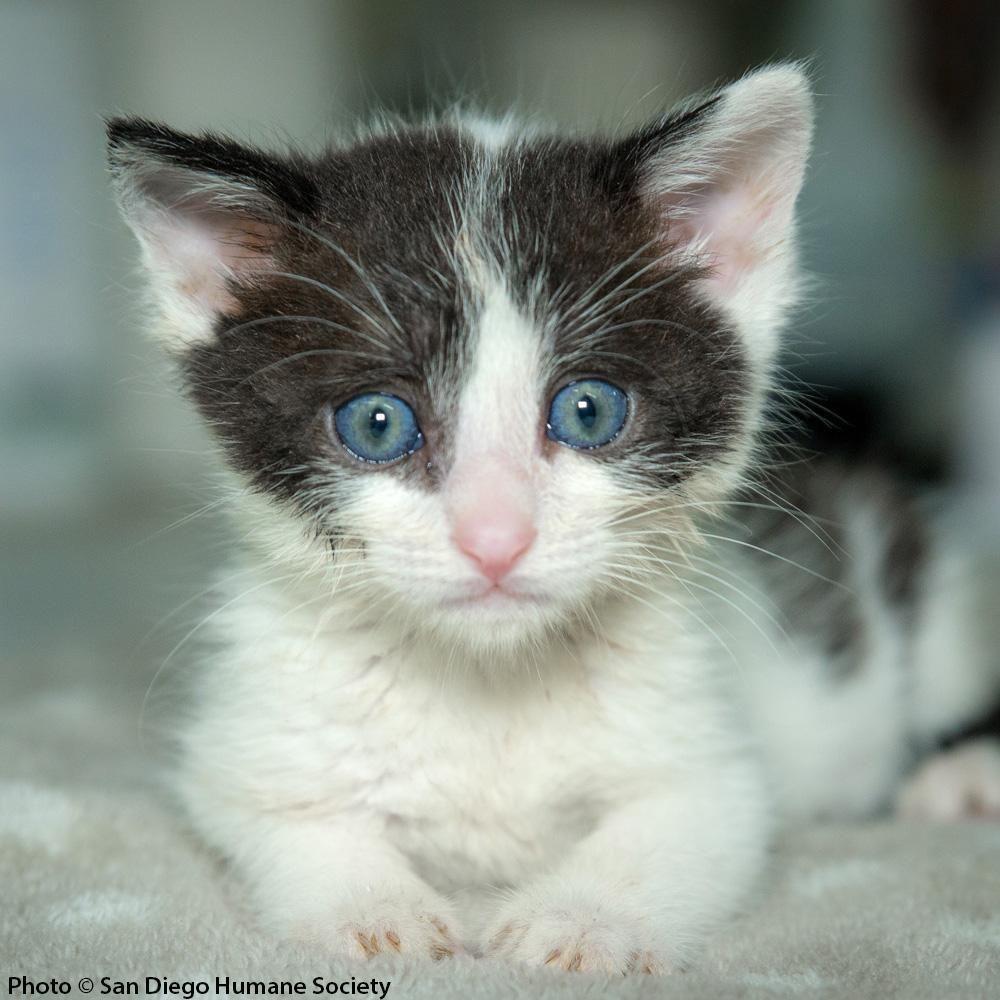 Provide Care for Orphaned Kittens Newborn kittens