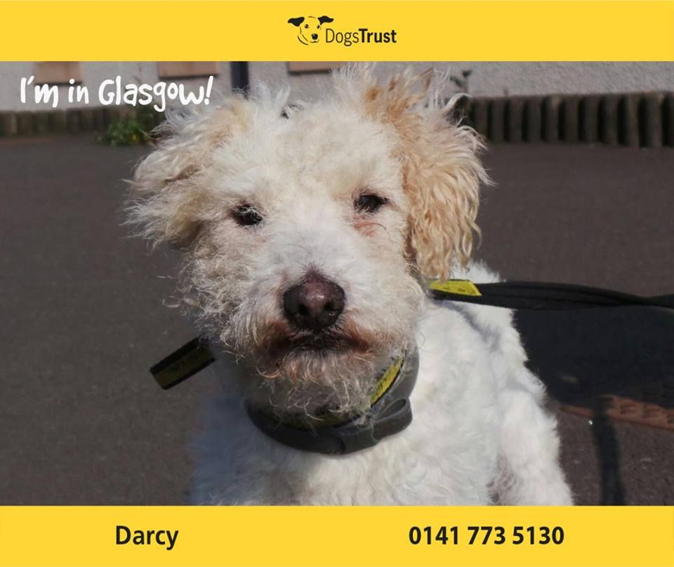 Darcy Is A Handsome Chap At Dt Glasgow He Is Worried Around New Situiations But Once He Gets To Know You He Loves To Play Dogs Trust Dog Waiting Dog Adoption