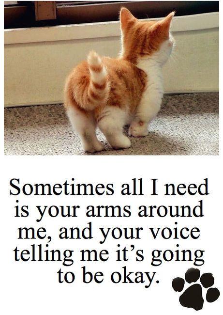 Superbe Cute Cat Quotes. QuotesGram