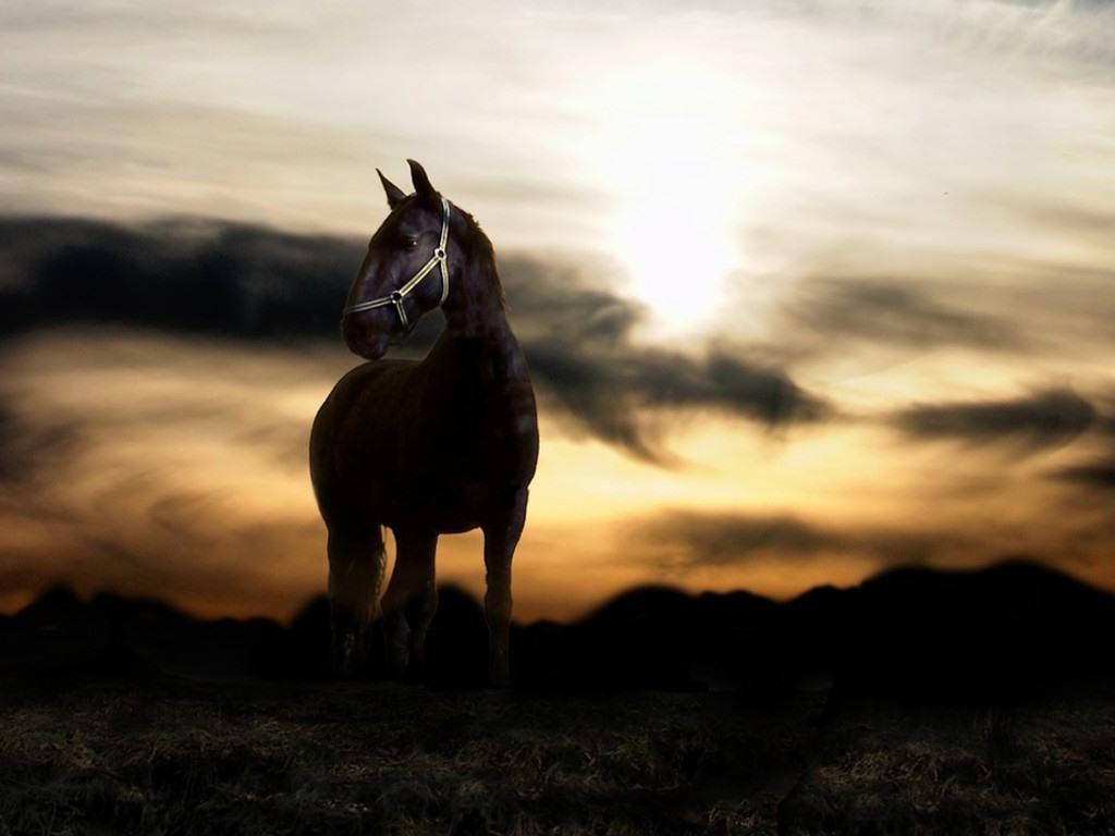 Pin By Masturo Wandes On Free Hd Wallpapers: Horse HD Wallpapers Free Wallpaper Downloads Horse HD