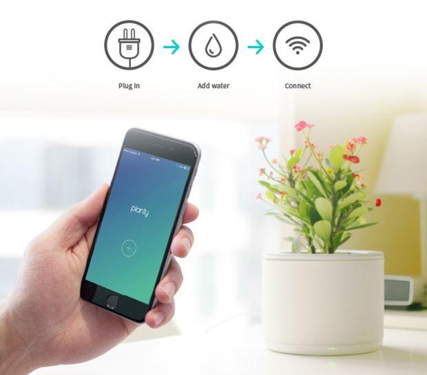 Planty, um vaso inteligente que conectado à internet, permite que você monitore sua planta através de um aplicativo no celular