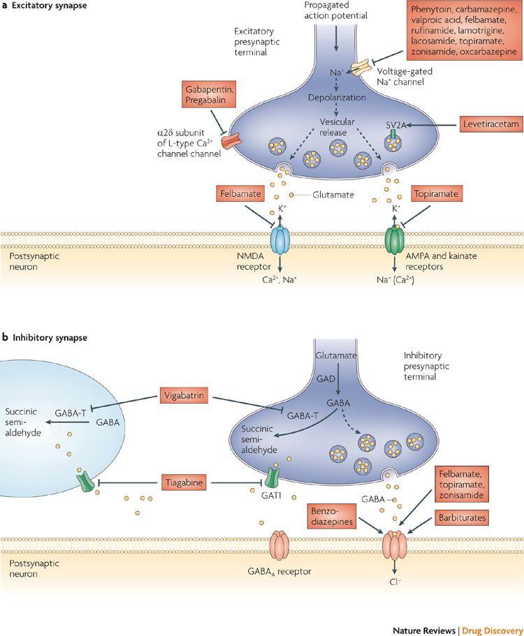 febrile seizures mechanisms and relationship to epilepsy