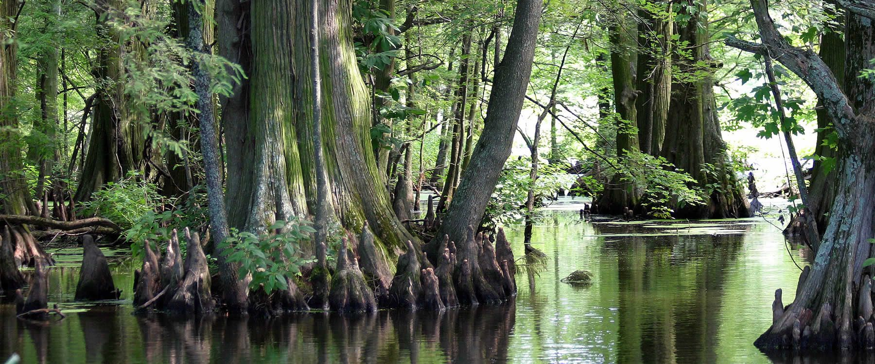 Image from http://reelfoottourism.com/reelfootlake/wp-content/uploads/2015/05/lgreelfoot02.jpg.