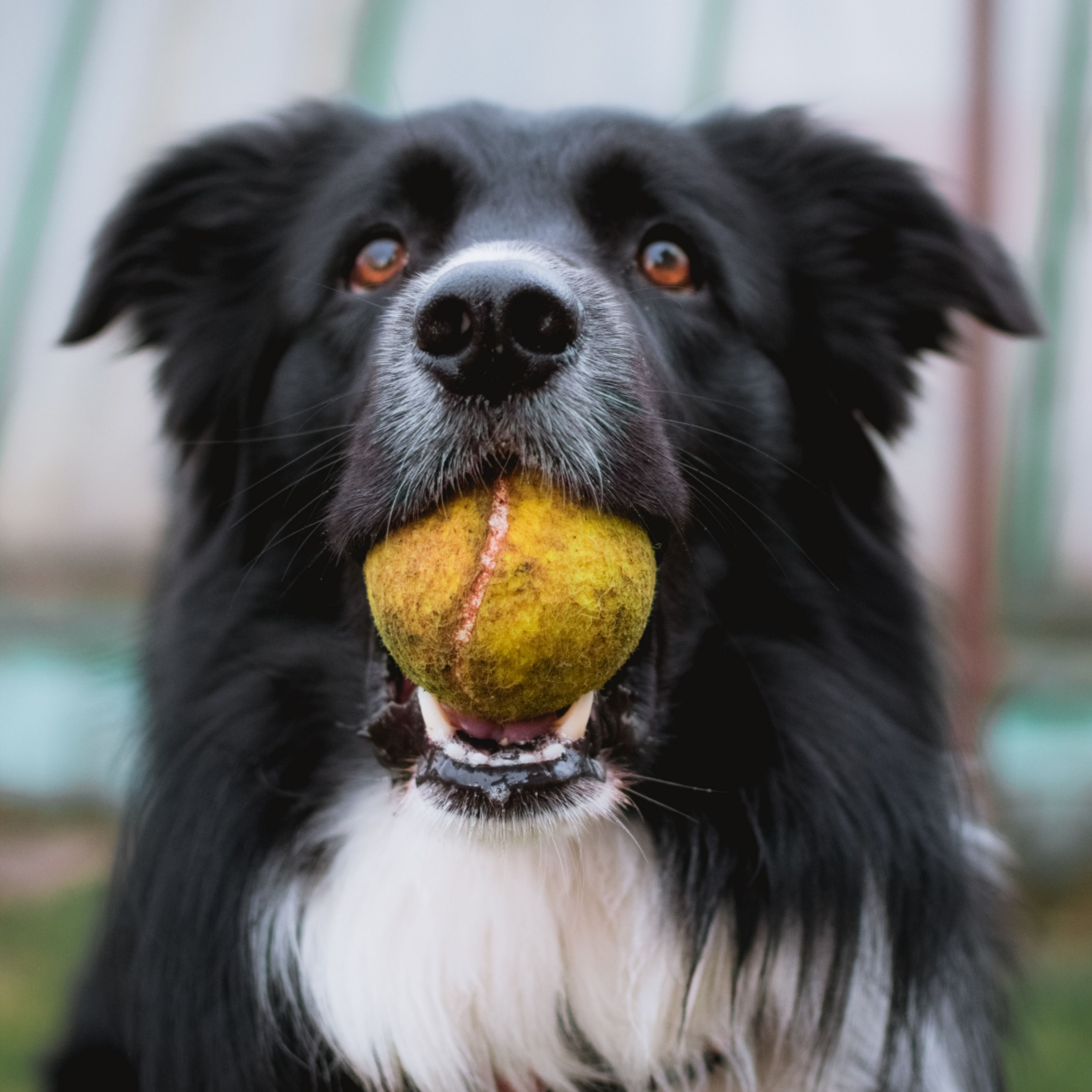 3 Fun and unusual tricks you can teach your dog to