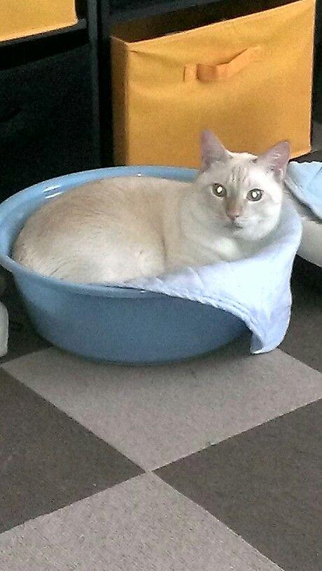 Chico at his basin bed