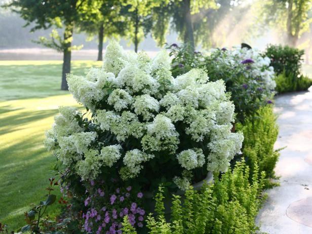 die besten 25 bobo hortensie ideen auf pinterest hydrangea paniculata hortensien und zwerg. Black Bedroom Furniture Sets. Home Design Ideas
