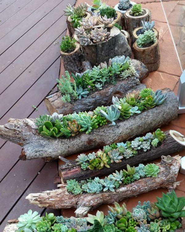 Propuestas deco con suculentas para interior y exterior   Cacti ...