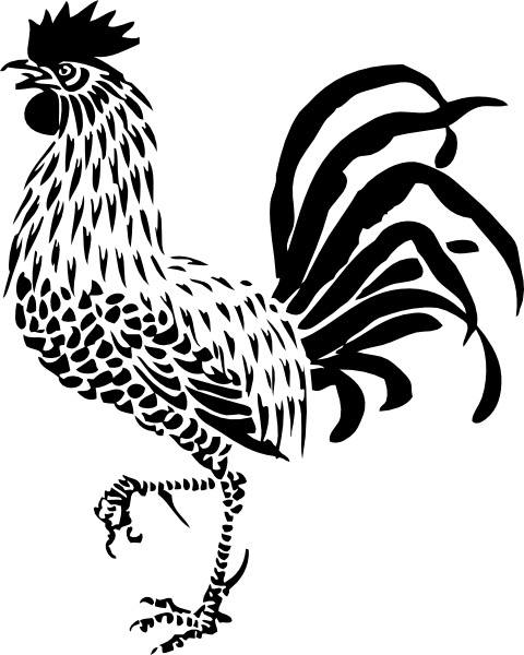 Line Drawing Rooster : Rooster drawing google search drawings pinterest