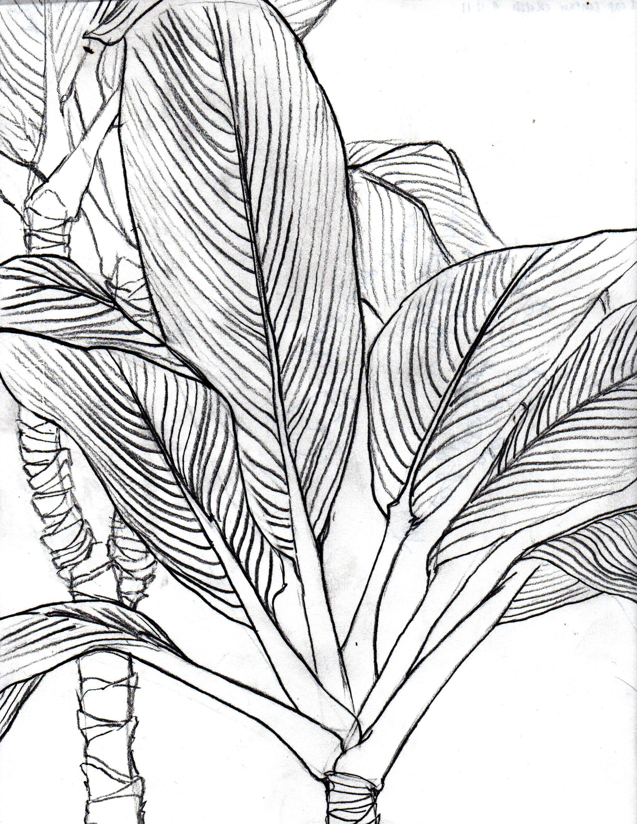 Line Drawing Leaf : Draw camp line lessons tes lines january journal