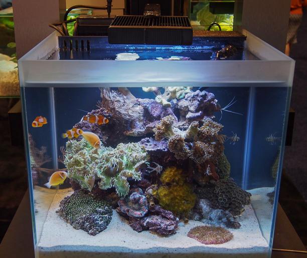 Descubre los acuarios marinos fluval y mant n un arrecife en perfectas condiciones http - Decoracion acuario marino ...