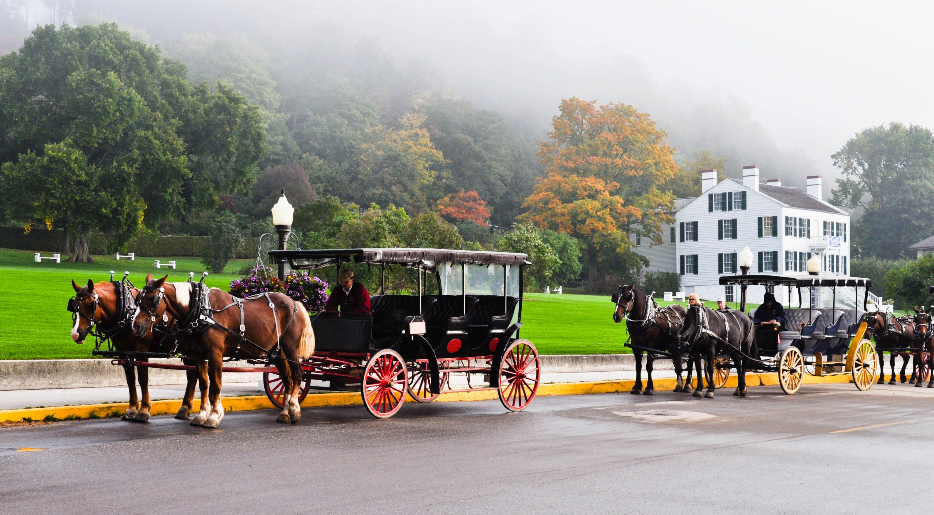 Private Carriage Tours Mackinac Island Island Horse Scenery