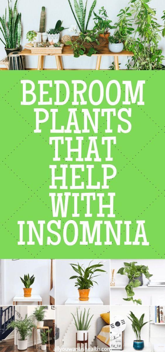 5 Schlafzimmer Pflanzen, die bei Schlaflosigkeit helfen   – For the Home