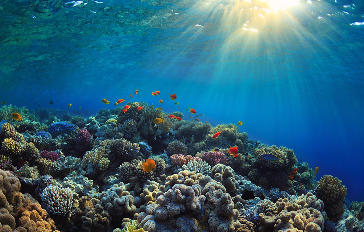 An Underwater Photo Of A Coral Reef Ecosystem With Brightly Colored Corals And Fish Ocean Coral Reef Ecosystem Beach Pool