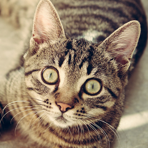 cat breeds  google search  cat care cats and kittens