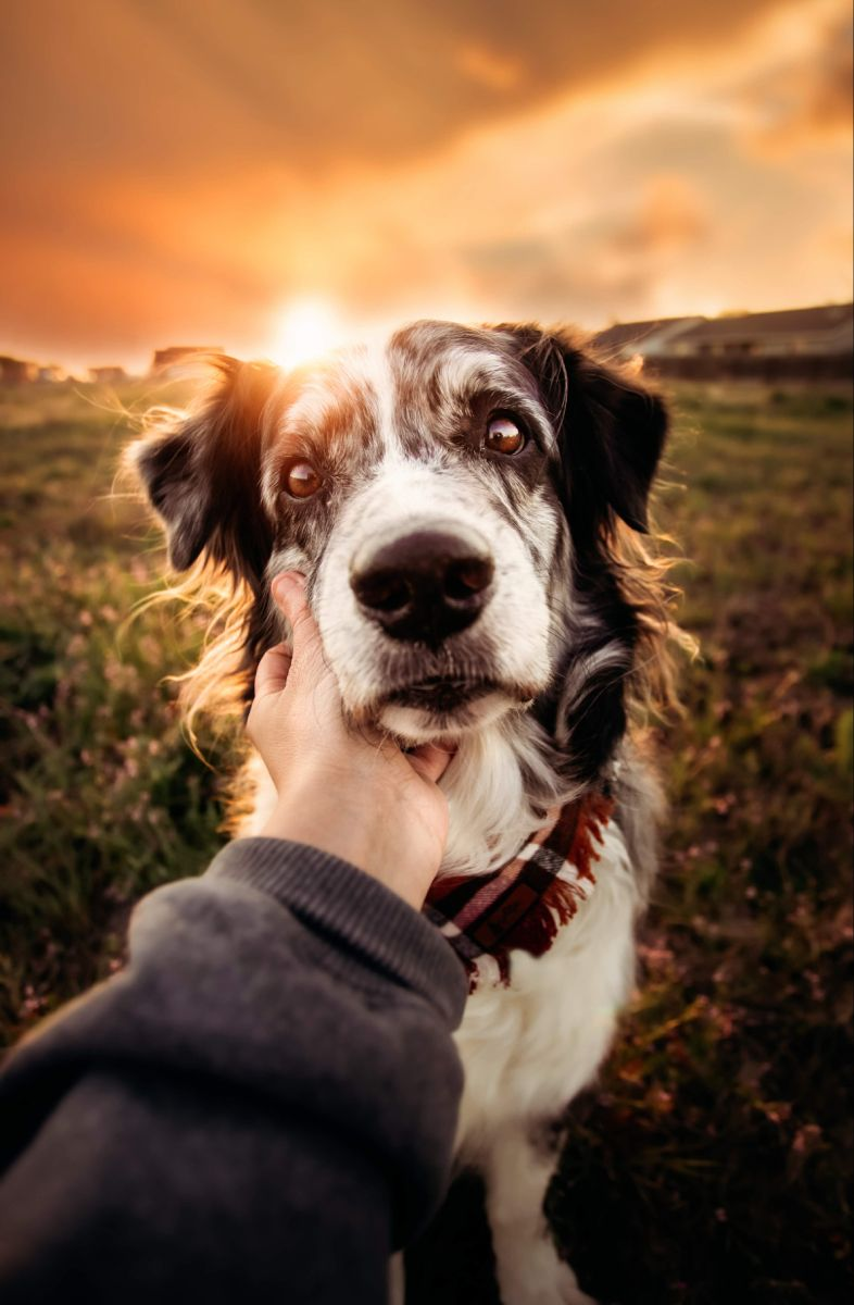 Pin on Pet Photography