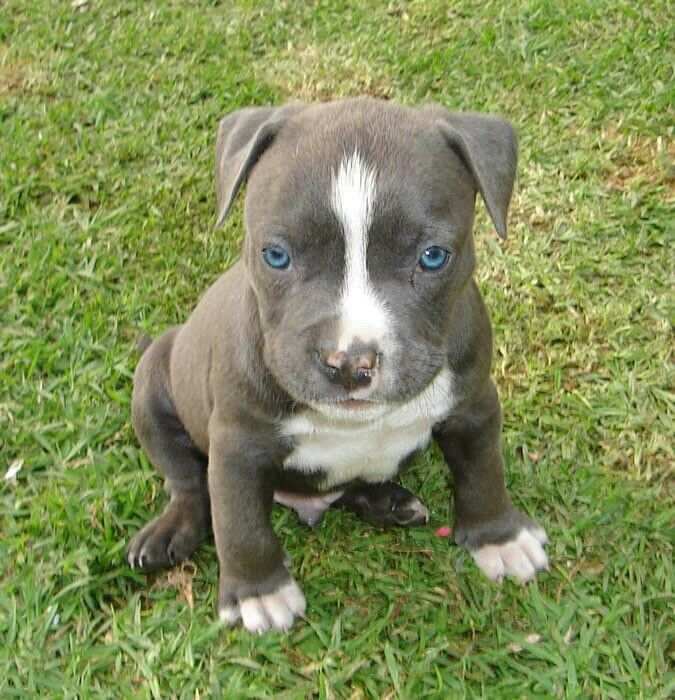 Pin By Va Bustos On Pupies Animal Heros Cute Animals Puppies