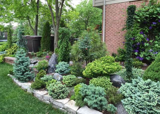 dwarf conifer garden blue tones predominate excellent. Black Bedroom Furniture Sets. Home Design Ideas