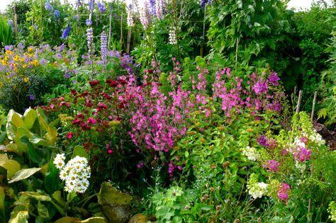 Wunderbar Sie Möchten Einen üppigen,verwunschenen Garten Anlegen? Mit Einem Cottage  Garten Schaffen Sie Verzaubertes