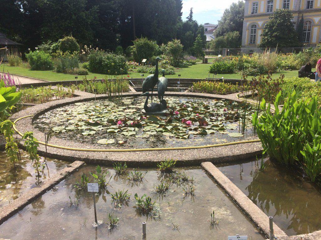Botanische Garten Der Universitat Bonn 2018 All You Need To Know Before You Go With Photos Tripadvisor Trip Advisor Bonn Botanical Gardens