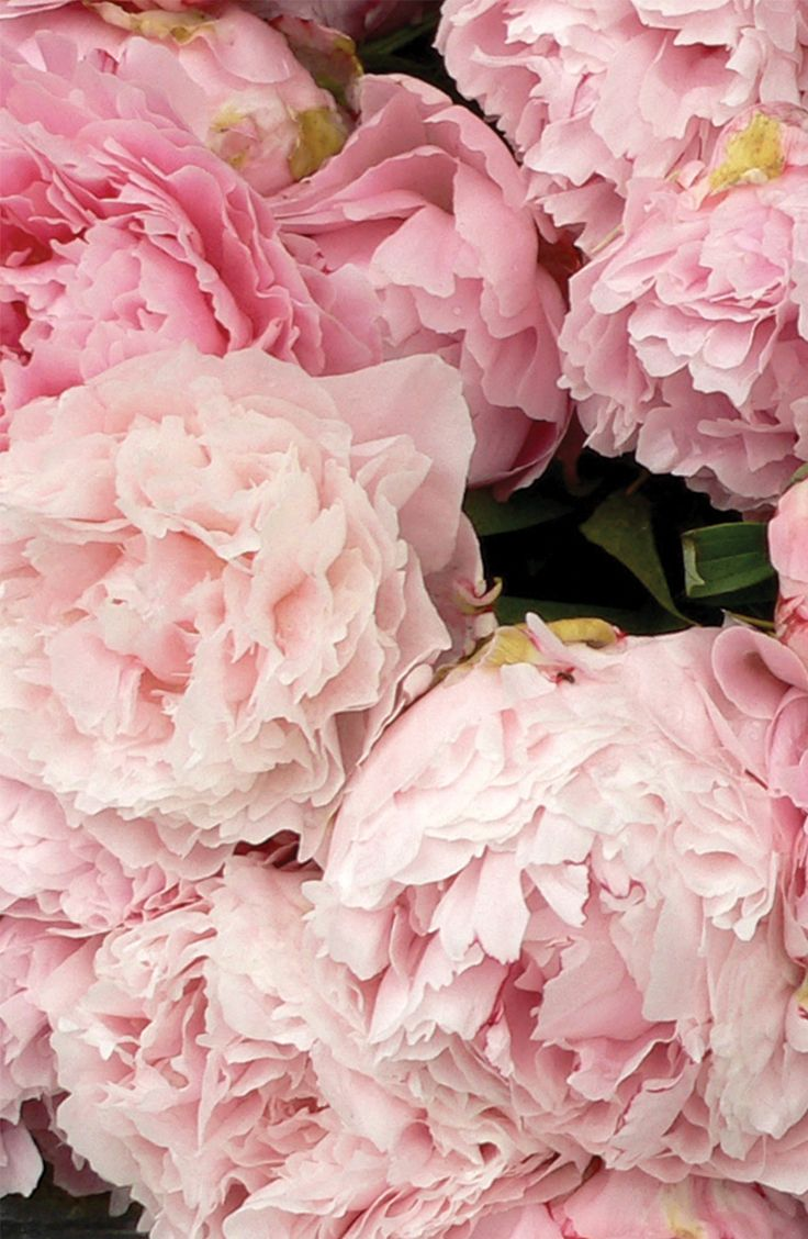 A Beautiful Bouquet Of Peonies With A Hint Of Crisp Red Apple And
